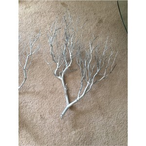 Manzanita Tree Branches