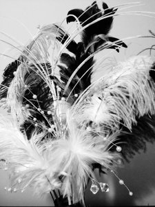 Black & White Feather Groupings