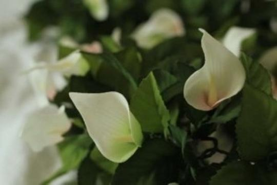 Preload https://img-static.tradesy.com/item/179214/michaels-green-and-white-silk-calla-lily-garlands-ceremony-decoration-0-0-540-540.jpg
