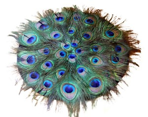 Peacock Feathered Chargers