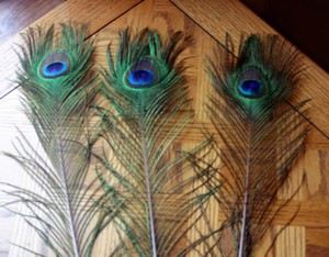 Pier 1 Imports Multicolor Single Feather Peacock Stems Reception Decoration