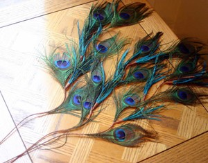 Pier 1 Imports Multicolor Feather Peacock Spray Stems Reception Decoration