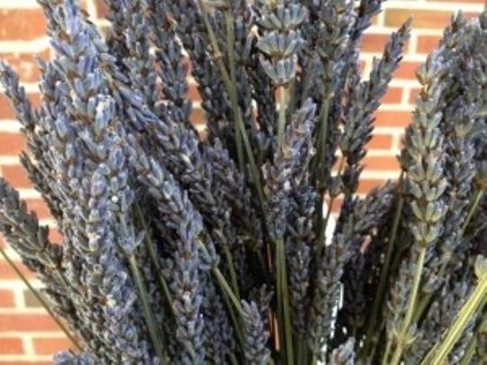 Preload https://item2.tradesy.com/images/lavender-14-bunches-very-fragrant-ceremony-decoration-195256-0-0.jpg?width=440&height=440