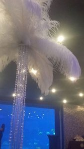 """350 White Ostrich Feathers (18-20"""") With Gold Shimmer Accents"""