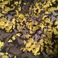 H&M Gray Yellow Black Floral Tulip Hem Skirt Image 1