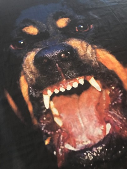 Givenchy Givenchy Rottweiler Print Scarf