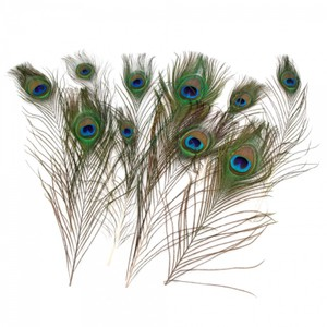 """Multicolor 50-pack Natural Peacock Feathers """"10-12"""" Centerpiece"""