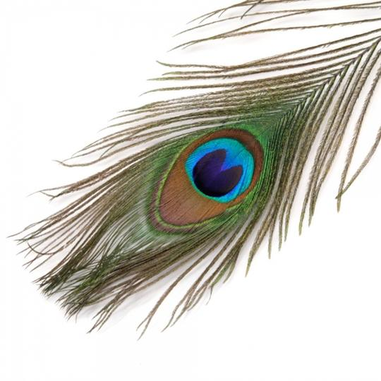 Multicolor 50-pack Natural Peacock Feathers