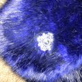 Royal Blue Faux Muffs and Embellished Scarf/Wrap Royal Blue Faux Muffs and Embellished Scarf/Wrap Image 4