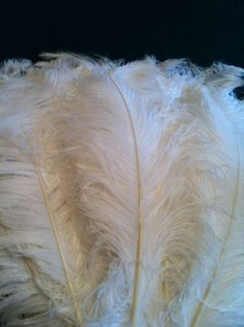 White Ostrich Feathers Plumes 22-28