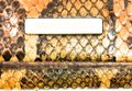 Burberry BURBERRY PYTHON SNAKESKIN CONTINENTAL WALLET CLUTCH Image 5
