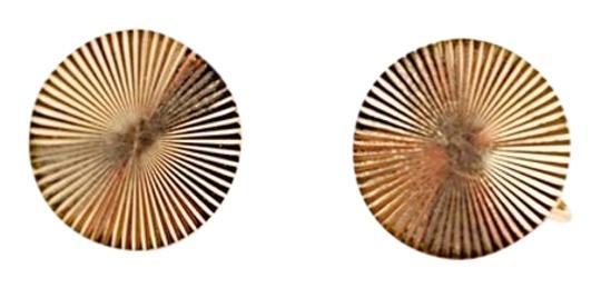 Preload https://img-static.tradesy.com/item/3301666/14kt-yellow-gold-disc-non-pierced-clipscrew-back-05-oz-weight-earrings-0-0-540-540.jpg
