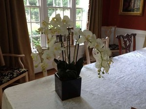 30 White Orchid Centerpieces