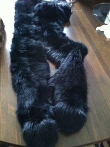 Unknown Very soft black fur - elegant