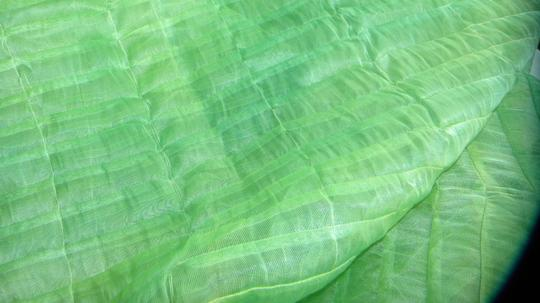 Celery Green Tablecloth