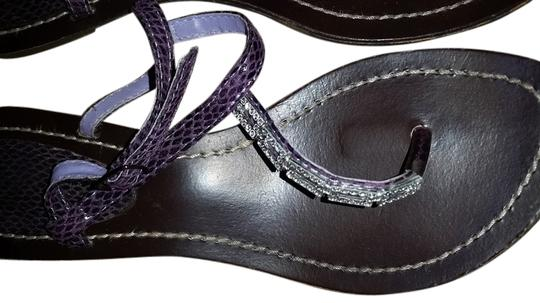 Other Purple Flats