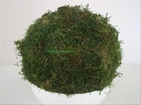 8 Inch Wide Preserved Solid Moss Ball Wedding Decorations Pew Aisle Ourdoor Wedding