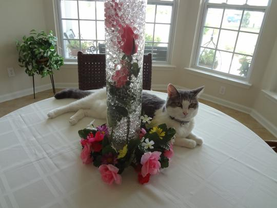 Red - Water Pearl Centerpiece Fill Out Vase Filler