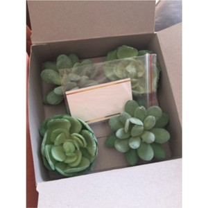 Kate Aspen Faux Succulent Place Card Holders